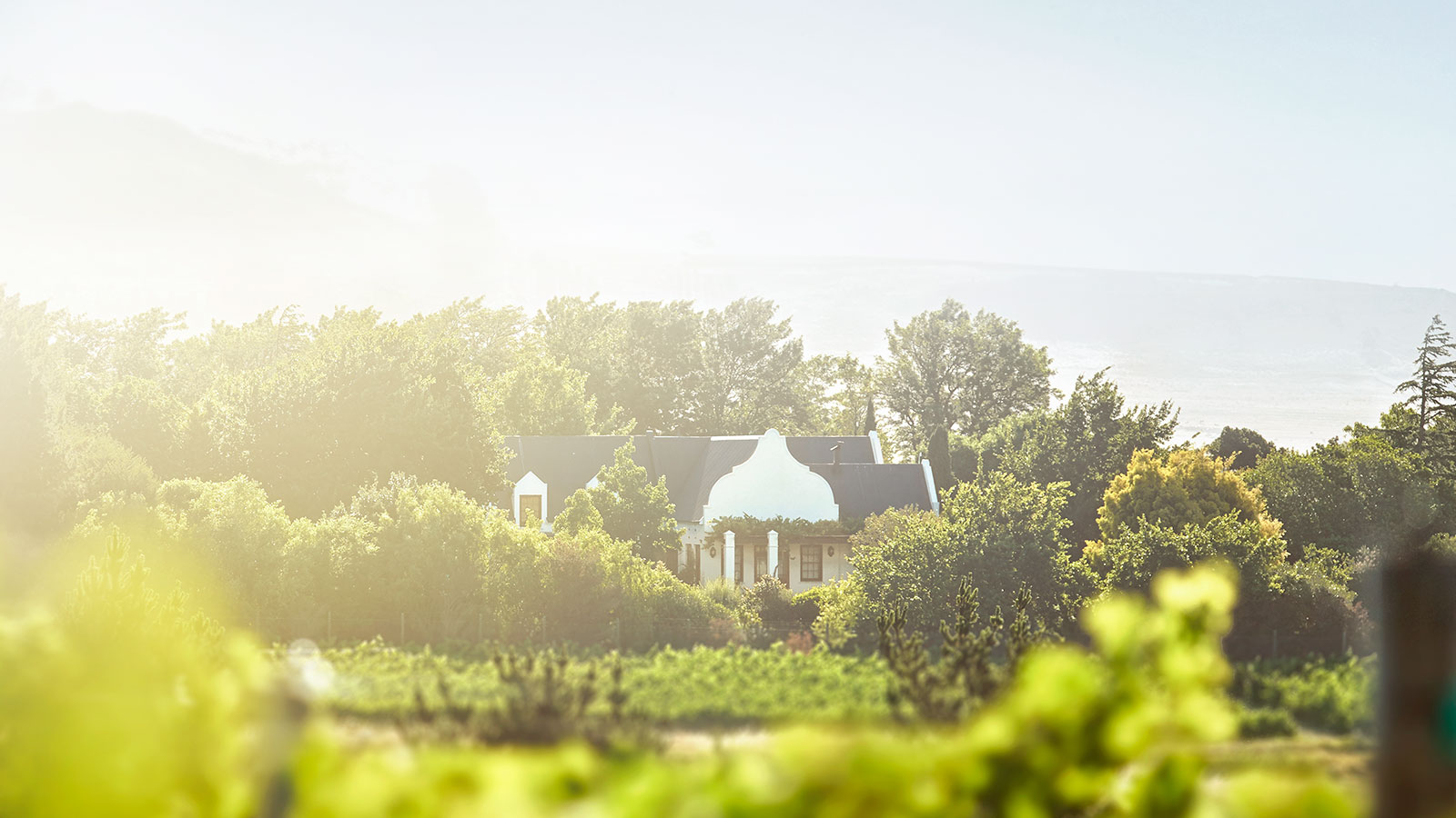 mount vernon wine estate