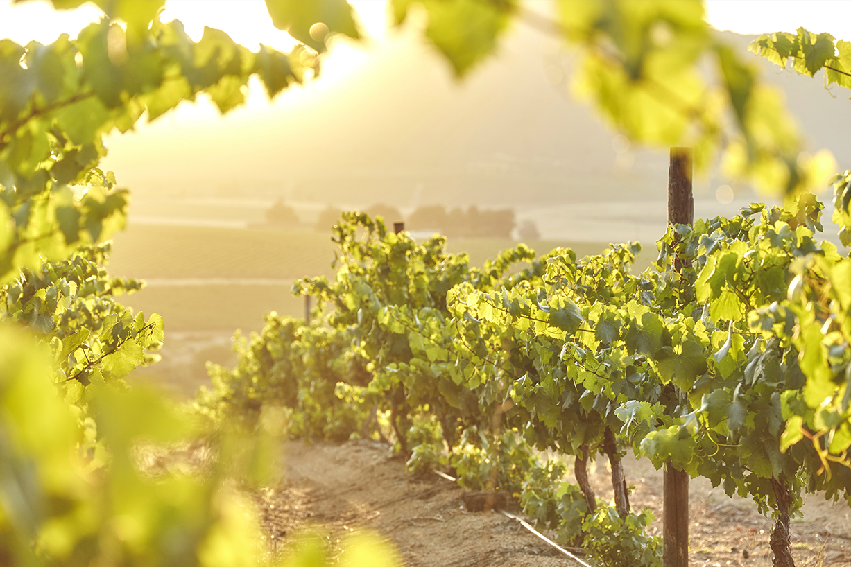 mt. vernon vineyards